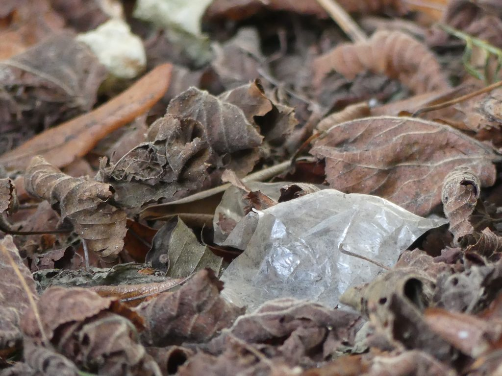 A torn piece of plastic film  blends into the leaf litter on the ground. Picture by Jamina Rillig.